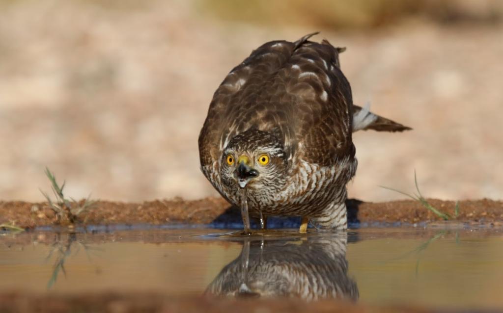 Ornitologicheskij park Ejlata1 1024x638 - Что посмотреть в Эйлате. Орнитологический парк. Краткая информация